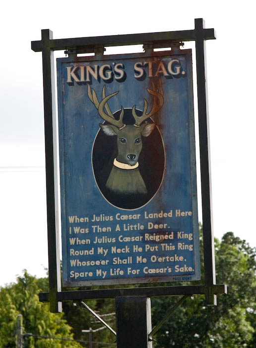 King Stag dorset